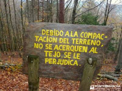 Hayedo Tejera Negra - Fiesta Almudena;reto senderismo las mejores rutas de senderismo de españa